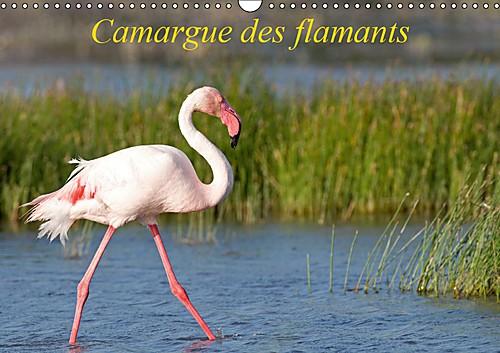 Camargue of flamingos