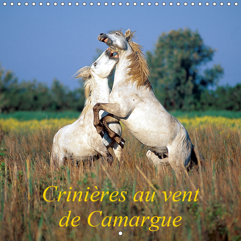 Manes in the wind of Camargue