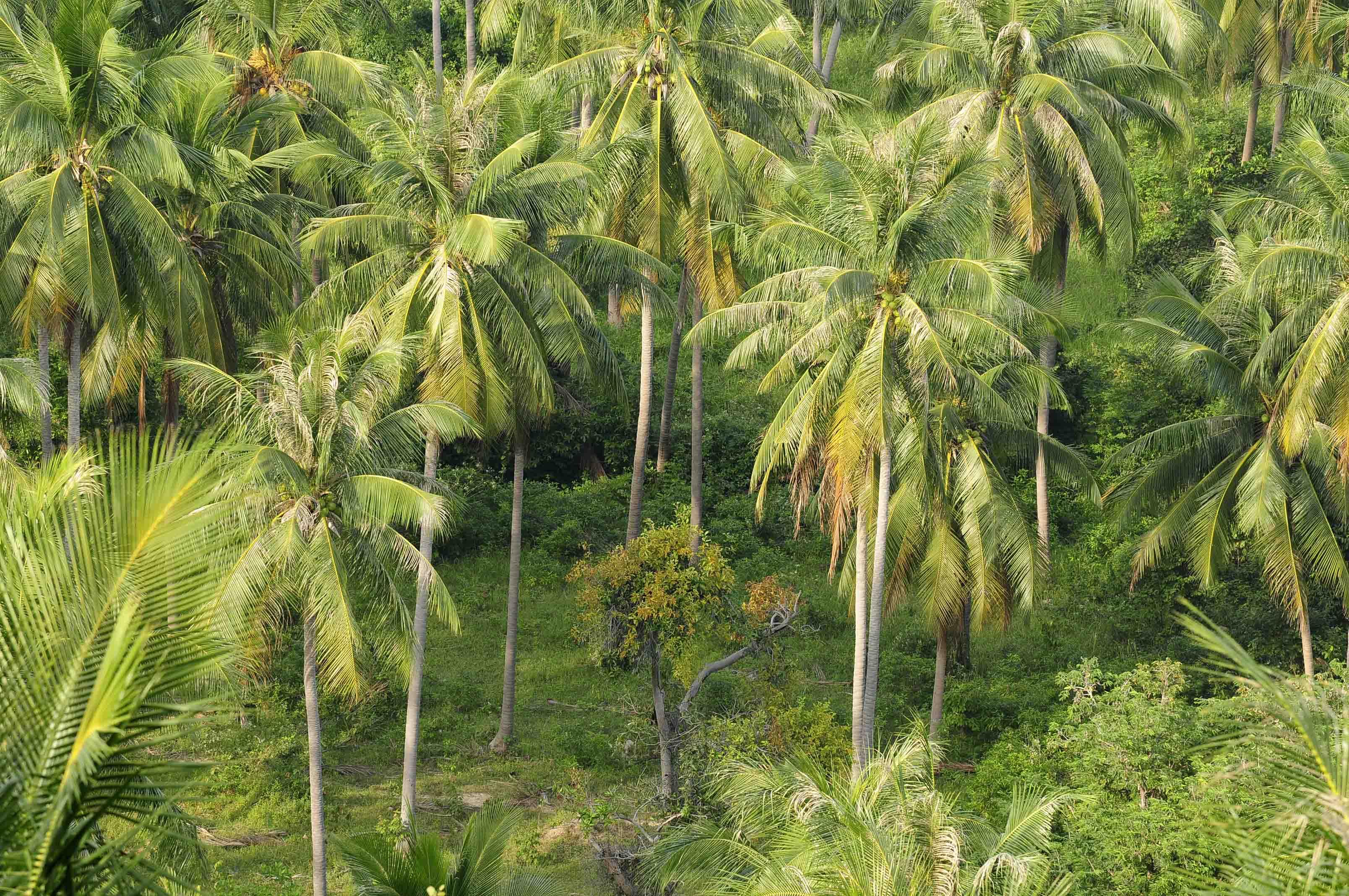 Somewhere tropical