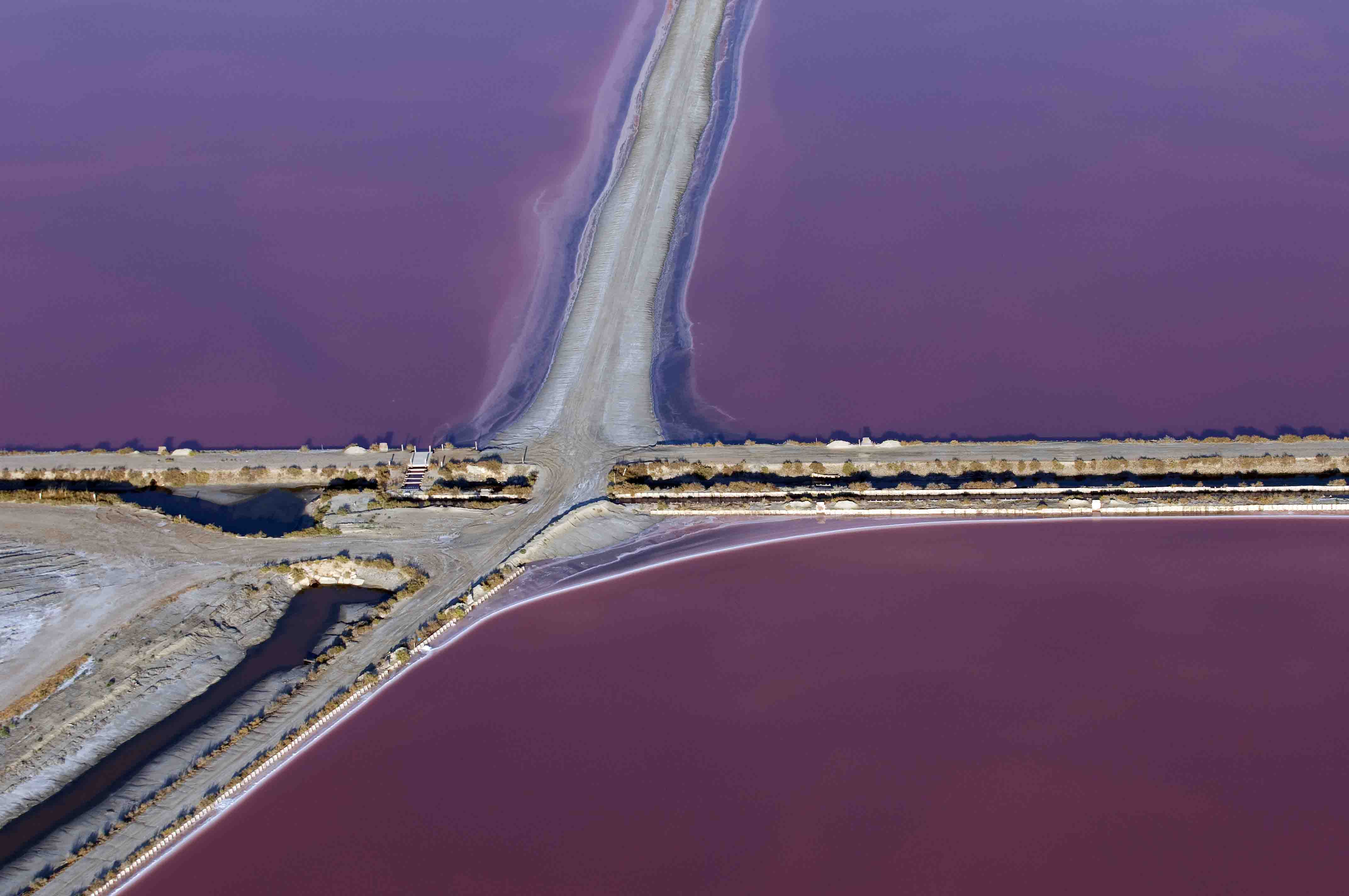 Purples salt marshes
