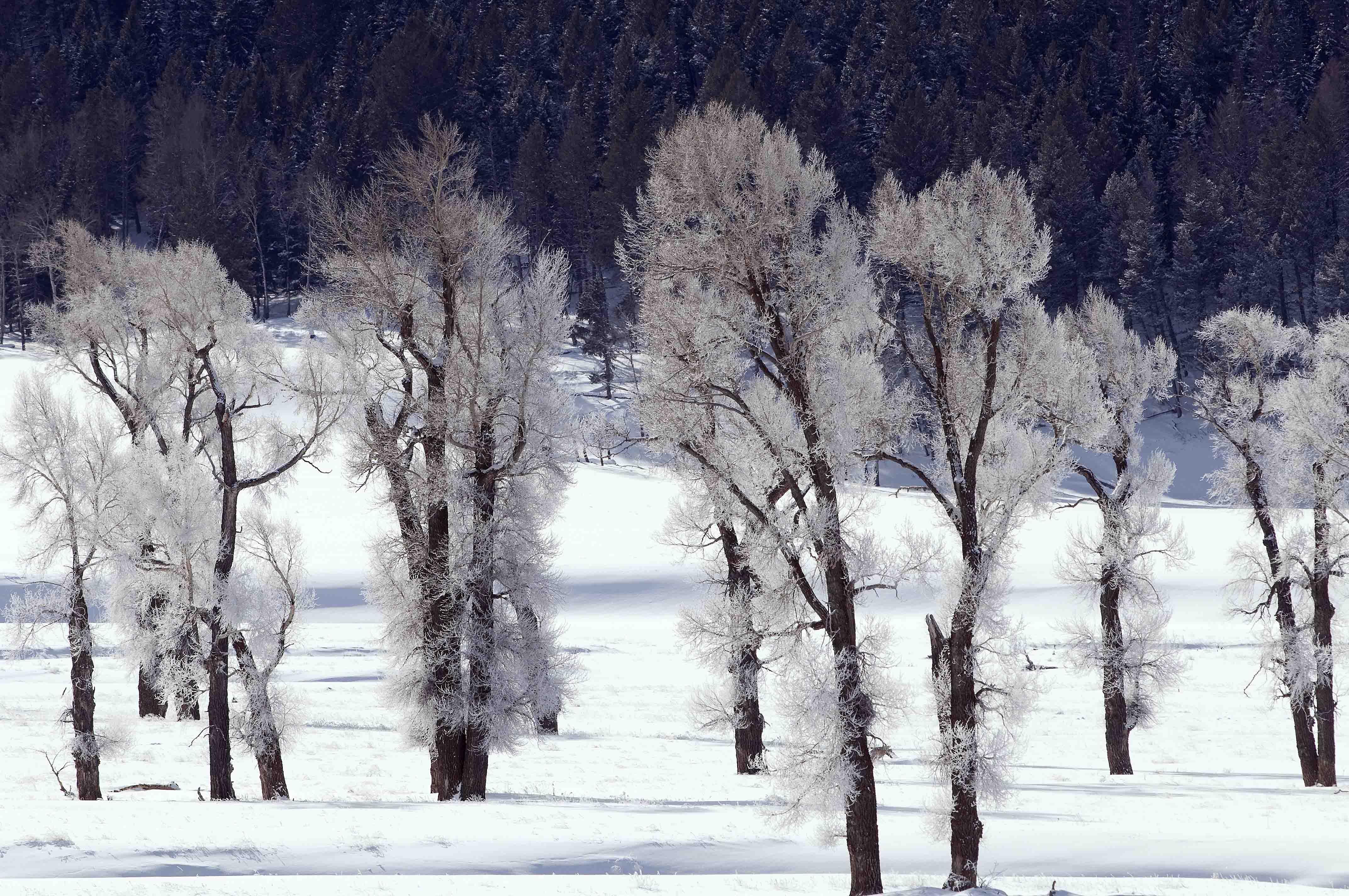 Frozen giants