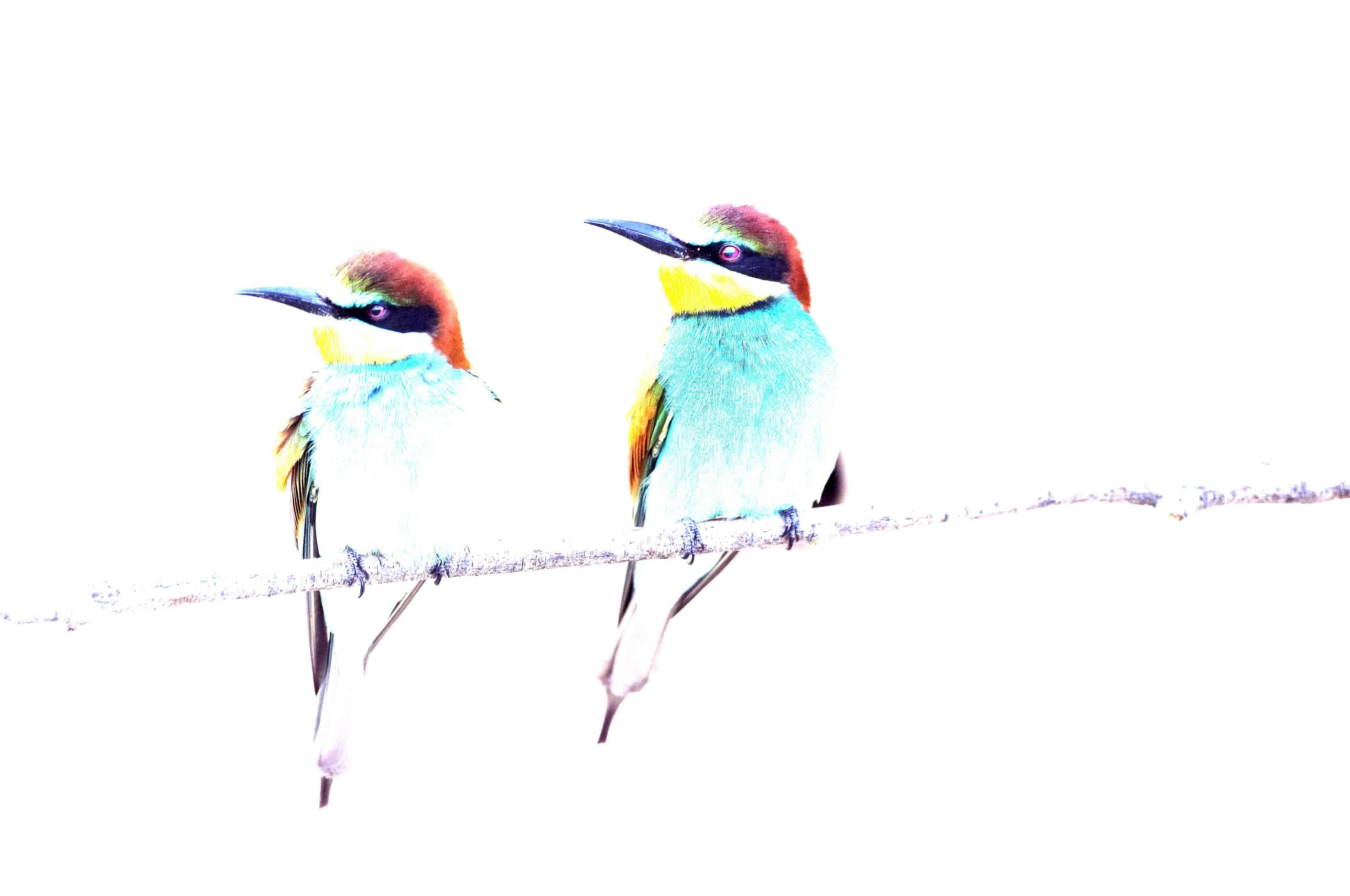 Rainbow couple