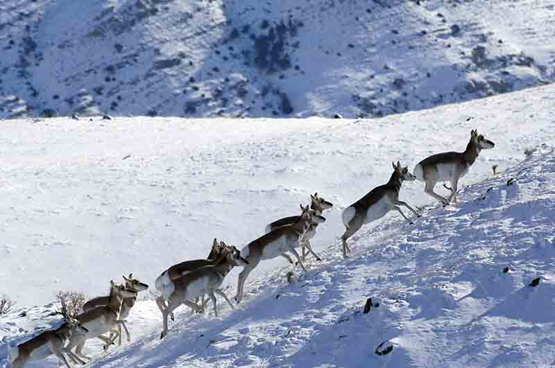 Course hivernale