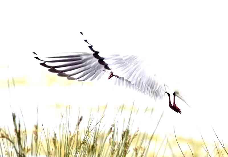 L'atterrissage